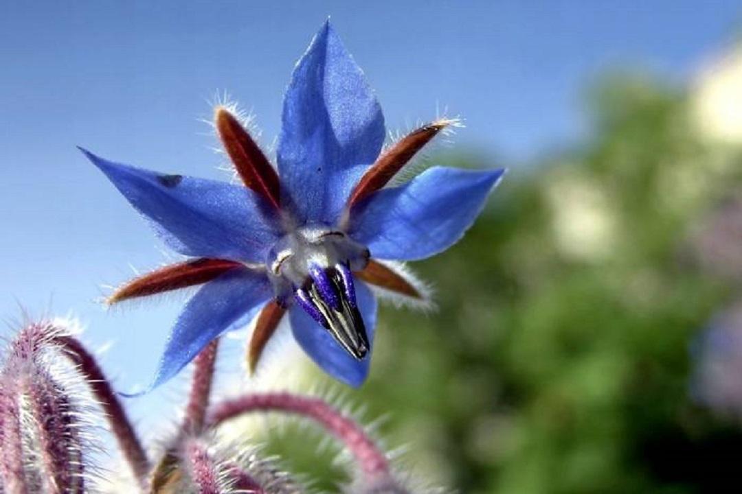 گیاهان دارویی، معجزه های شفا بخش طبیعت