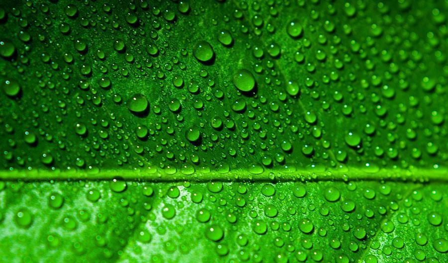 چرا گیاهان سبزند؟ ، انعطاف پذیری برای کنترل میزان انرژی مورد احتیاج